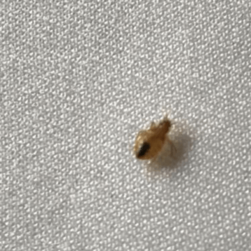 Bed bugs (772)579-0230
