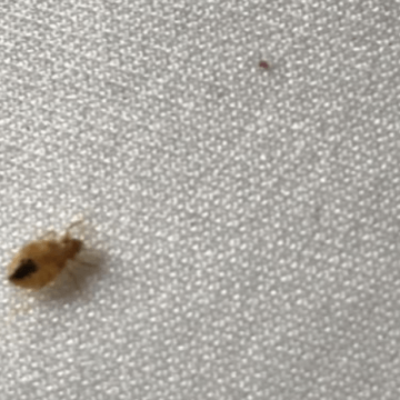 Bed bug Treatment (772)579-0230