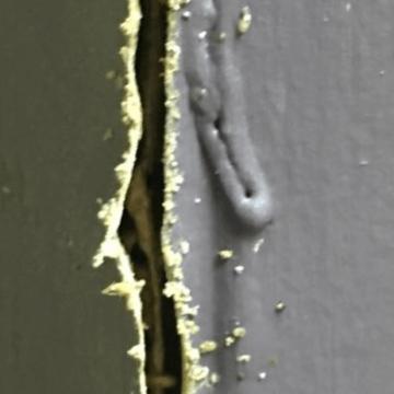 Formosan Subterranean Termite galleries (772)579-0230