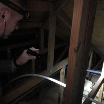 Inspection of attic for Roof Rats (772)579-0230