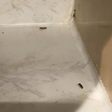 Drywood termite (772)579-0230