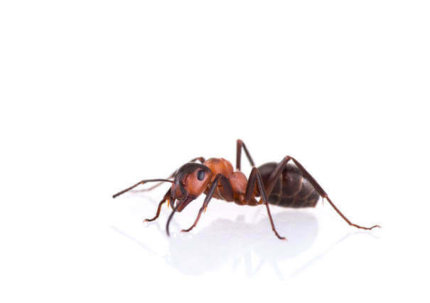 Ant Control Removal