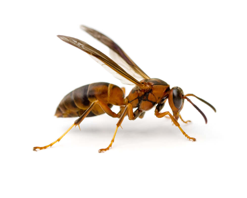 Bees and wasp (772)579-0230