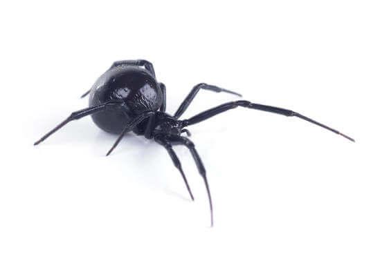 species of spiders(772)579-0230