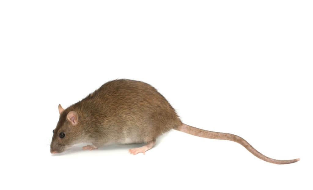 Ratastic (772)579-0230