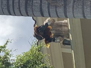 Bee Service