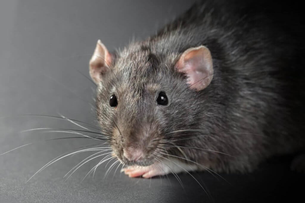 rodent control (772)579-0230