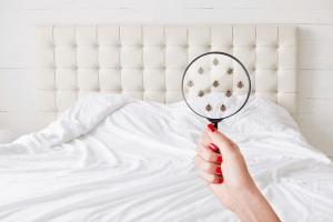 Juno Beach Bed Bugs Control