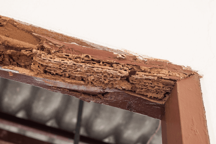 Know About Termites