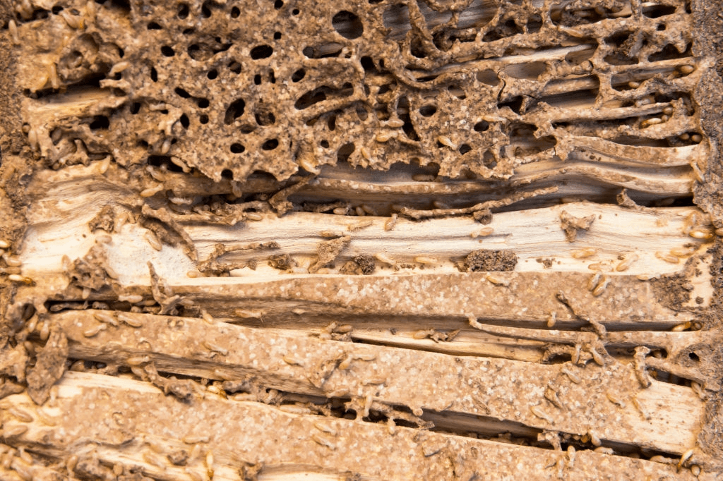 Termite Control West Palm Beach
