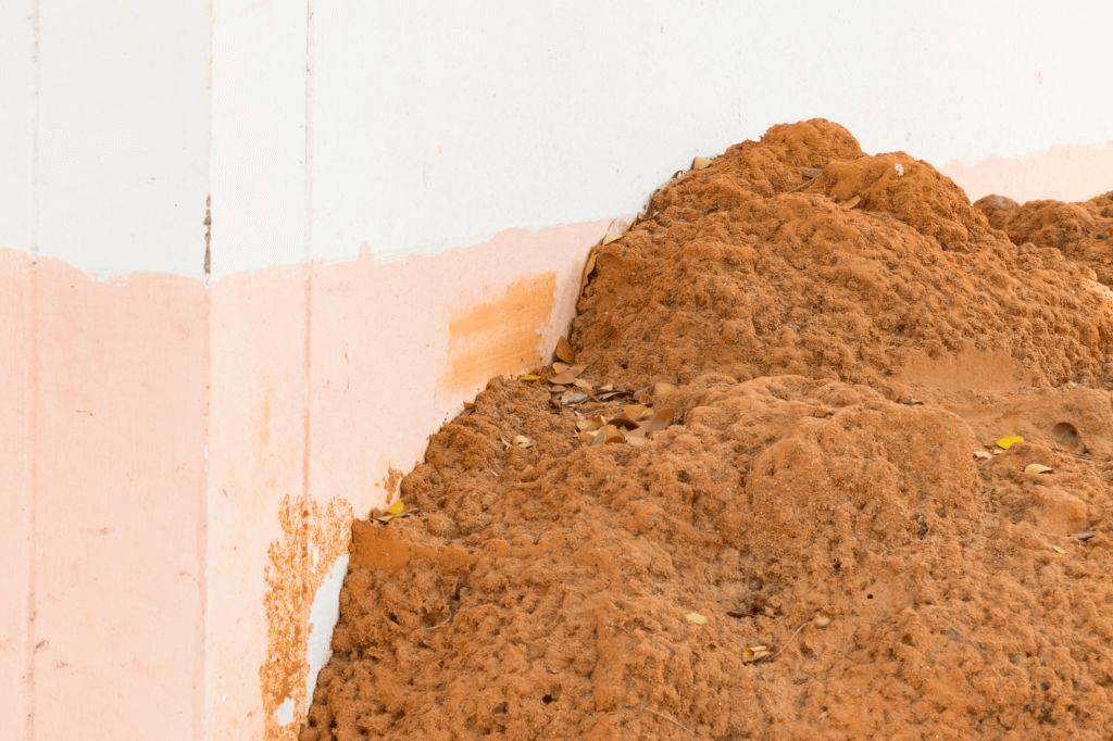 Termite Treatments West Palm Beach