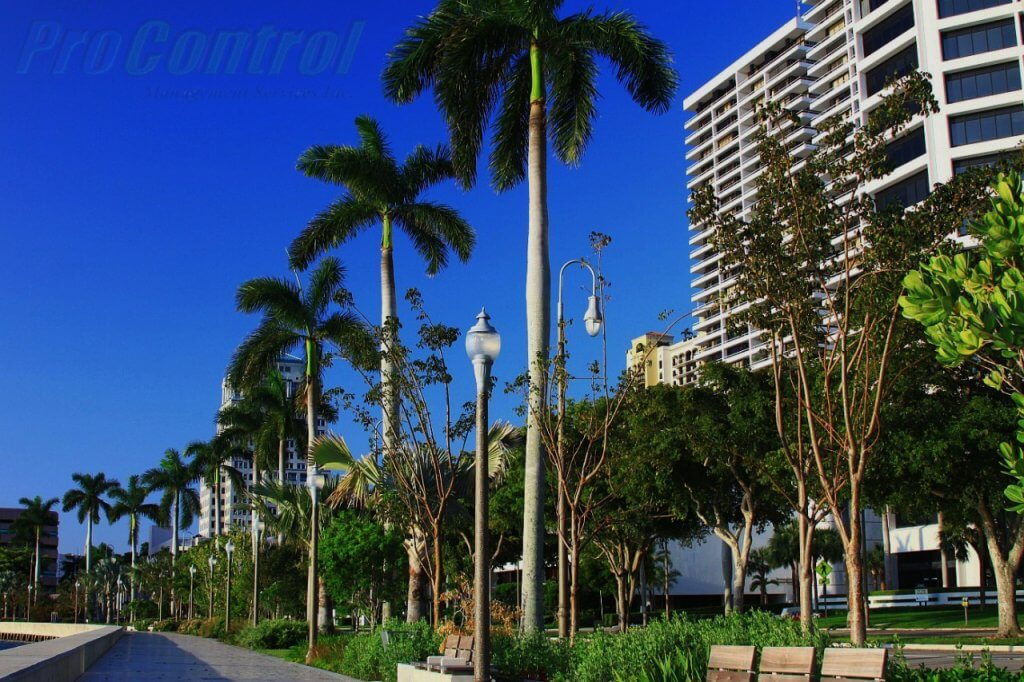 palm trees and buildings in west palm beach