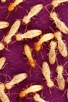 Termites in West Palm Beach – ProControl Termites Service