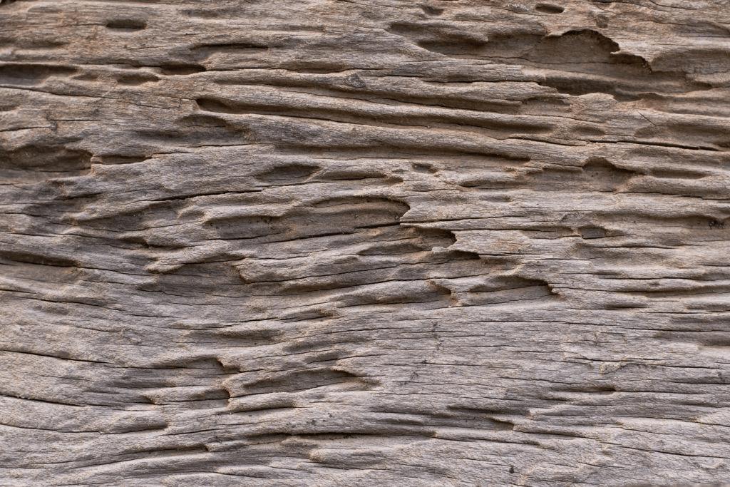 Quality Termite Treatment West Palm Beach