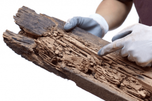 termite control services in Port St Lucie