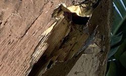 Termite-Control-Service