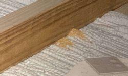 Termite-Service-Near-Me-1-e1571948977365
