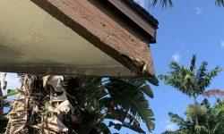 Termite-Service-St-lucie-e1571948933287