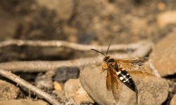 Wasp-Control-Service